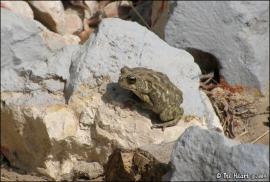 IMG_2285__frog